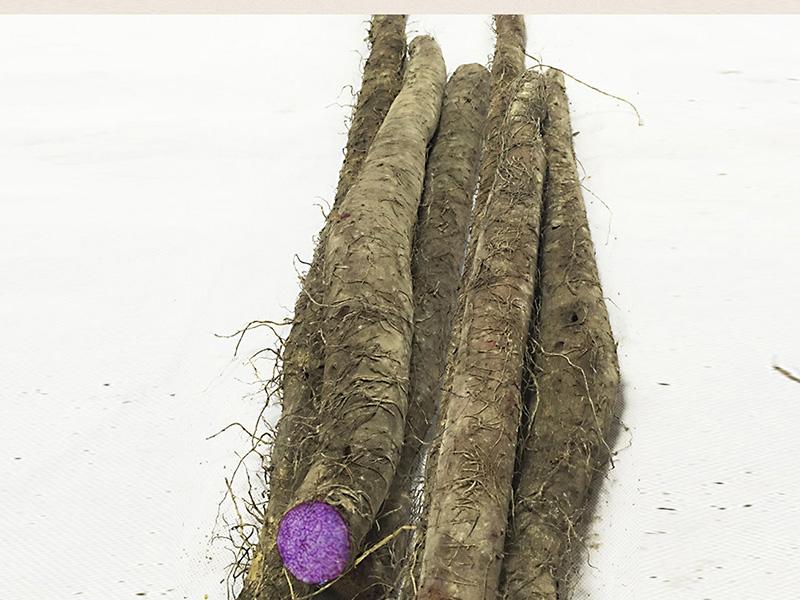 紫玉淮山供应商哪家好-紫淮山的做法