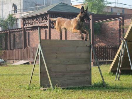 宠物培训基地 惠州哪里有可信赖的惠州宠物培训