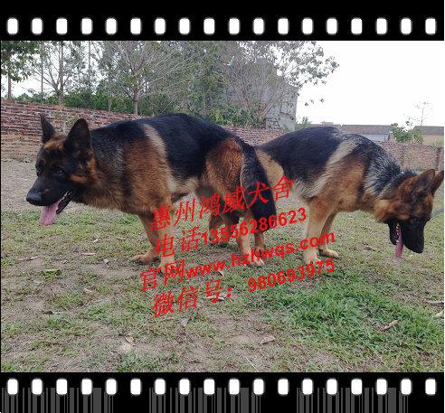 靠谱的犬类繁殖公司推荐_宠物狗繁殖基地