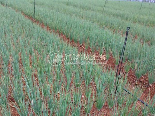 柳州节水灌溉系统安装-南宁专业的南宁滴灌管规格