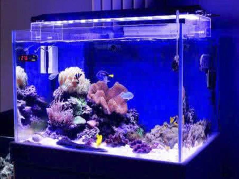 銷售亞克力魚缸|出售淄博品質好的亞克力魚缸
