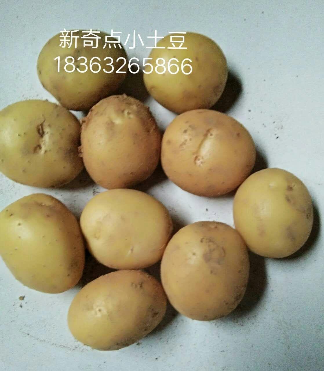优良迷你小土豆供应商推荐,西宁油炸小土豆