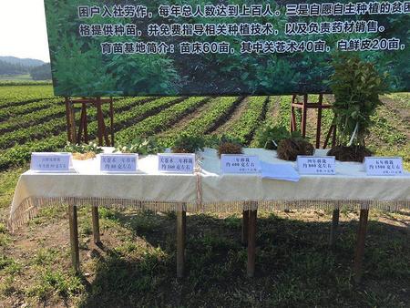 鹤岗苍术供应——黑龙江苍术供应商推荐