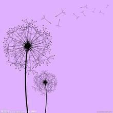 价格合理的花卉-蒲公英花茶-蒲公英狮