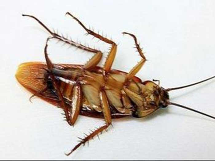 天水灭蟑螂厂家 天水灭蟑螂供应商 天水灭蟑螂哪家好 