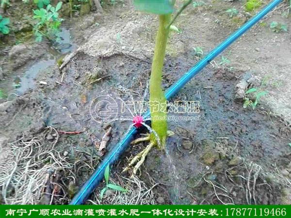 广西南宁市农业喷灌材料设备_高品质果树小喷头推荐