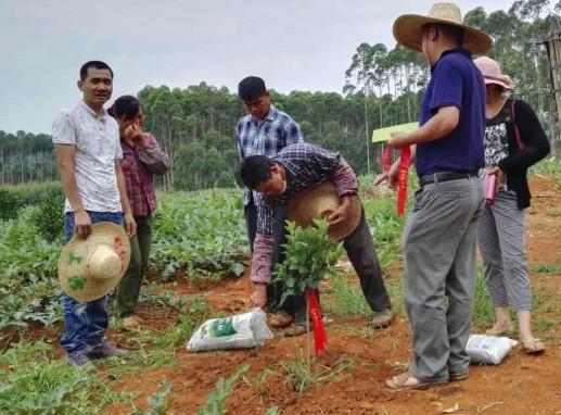 钦州有机肥厂_口碑好的广东有机肥厂家当选玉林市绿涛有机复合肥