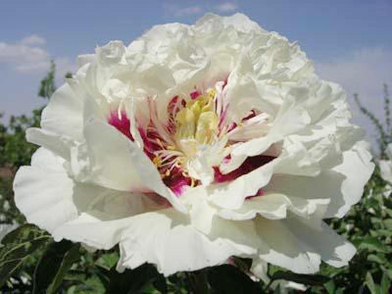 兰州花卉价格|供应定西不错的花卉