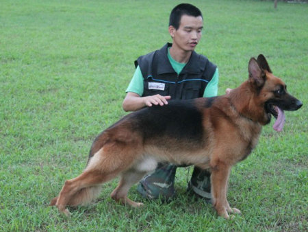 广东可靠的惠州专业训犬公司推荐 训犬师培训