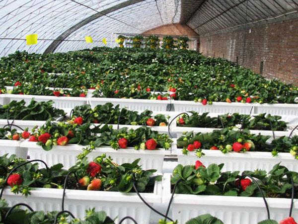 花卉温室大棚就选万铭农业科技 球型温室