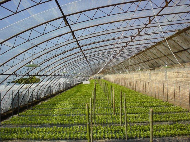 桂林农膜厂家-哪里能买到实惠的大棚膜