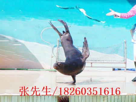 淮安海狮表演,徐州有口碑的海狮表演