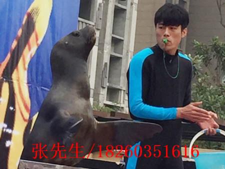 江苏有口碑的海狮表演推荐-湘潭海狮表演