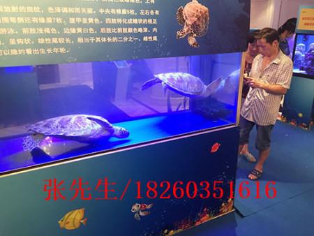 爬行动物展如何_徐州有品质的爬行动物出租