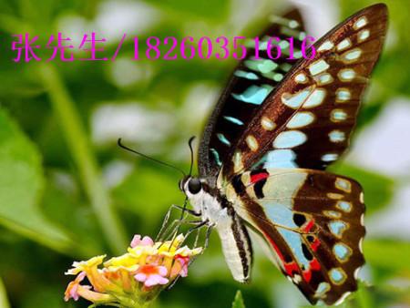 海洋展活动-徐州可信赖的活体蝴蝶放飞活动公司