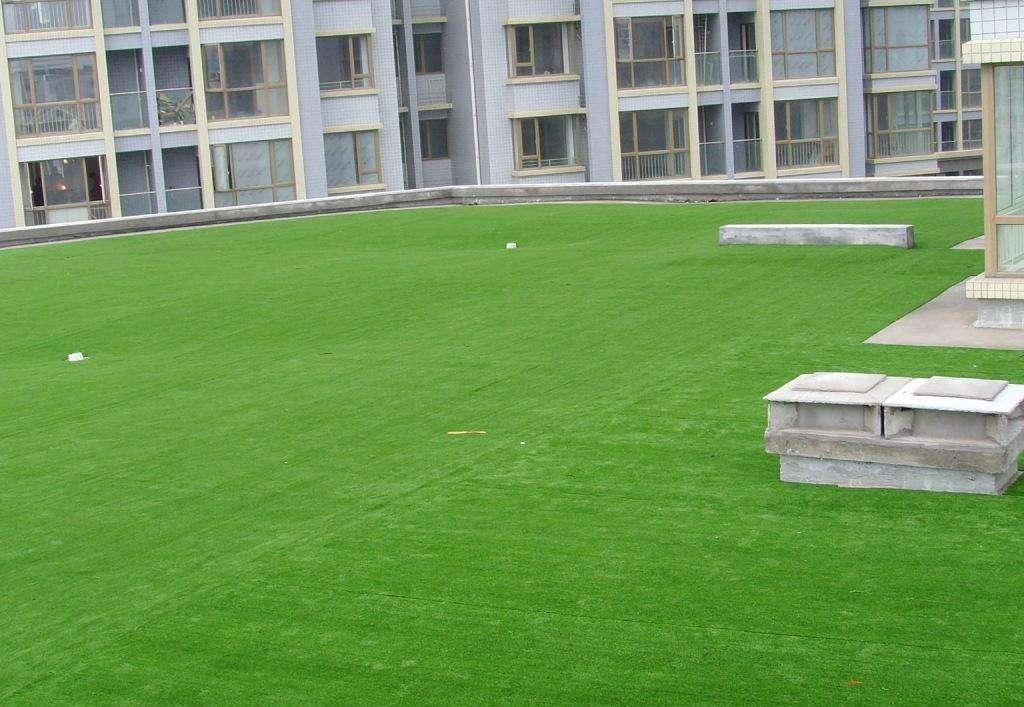 草坪-买草坪当然选天园家庭农场