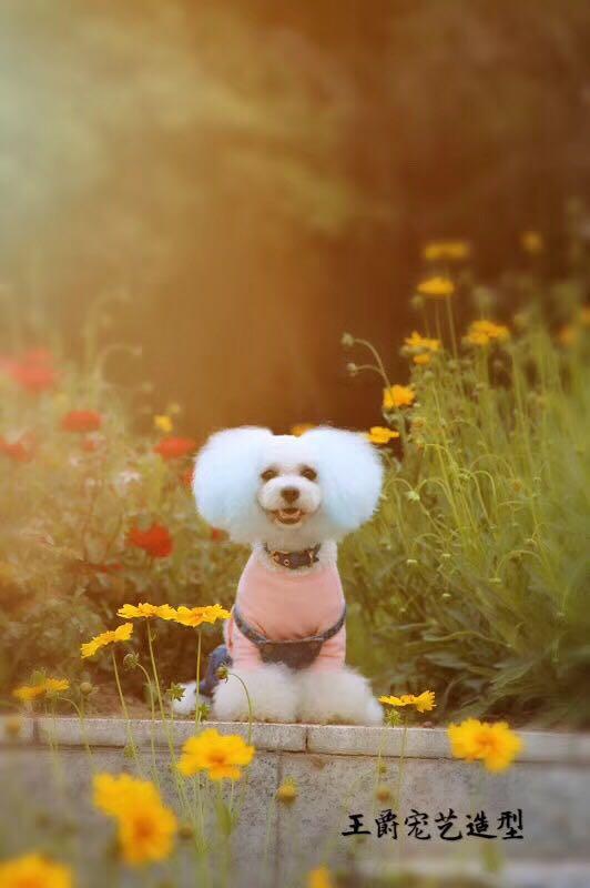 宠物美容培训_潍坊有口碑的宠物美容公司