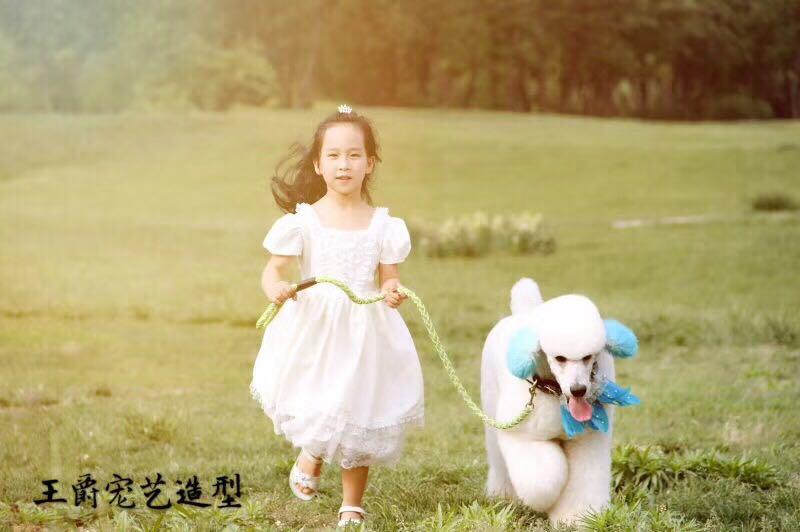 宠物师培训_王爵宠艺宠物提供靠谱的宠物美容用品