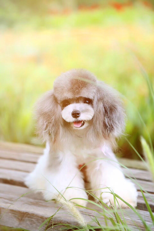宠物美容师培训|潍坊具有口碑的宠物美容用品哪里有