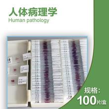 耐用的显微镜玻片品质供应|陕西生物切片