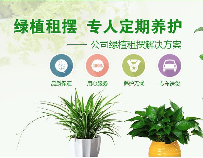 黑龙江哪里有可靠的花卉租赁-全面的哈尔滨花卉租赁