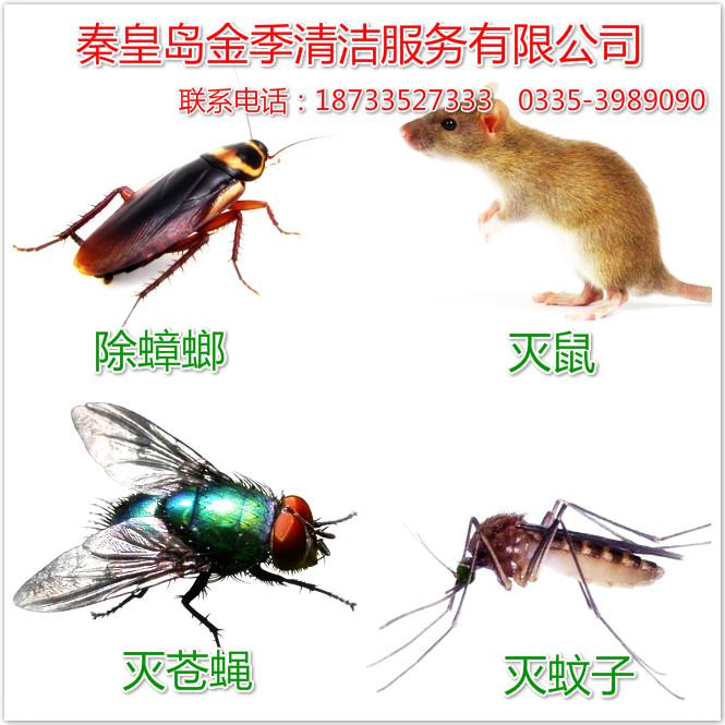 青龙灭鼠-专业的秦皇岛灭鼠提供