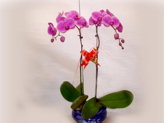 哈尔滨花卉租赁货真价实 黑龙江哪里有提供口碑好的哈尔滨绿植租摆