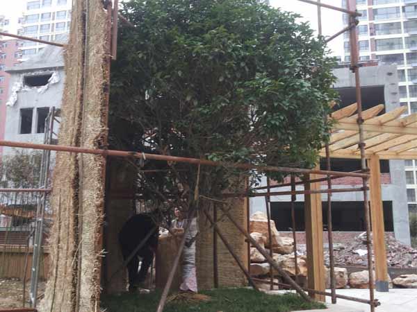 园林景观养护公司,山东有信誉度的园林绿化养护公司