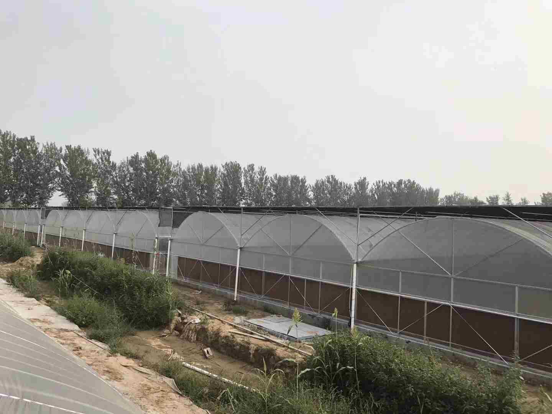 哪里有提供结实耐用的温室建设,结实耐用的温室大棚