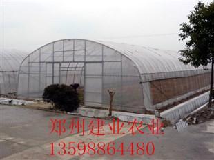 郑州温室大棚厂家直供-哪里有提供效果好的温室大棚
