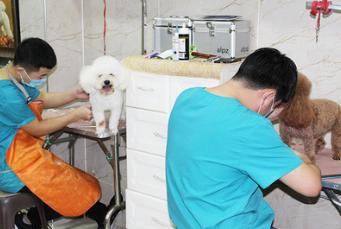 【咪诺宠物】烟台宠物医院 烟台宠物诊所 芝罘区宠物医院