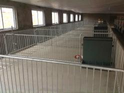 价格实惠的猪用产床就在美固畜牧机械,山东猪用产床厂家