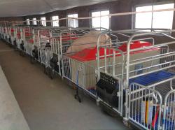 美固畜牧机械质量好的猪用保育床出售_猪用保育床供应商