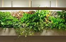 室内绿化专业提供,苍山室内绿化