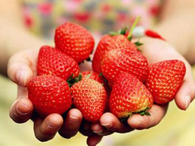 泰安红颜草莓专业供应 草莓低价批发