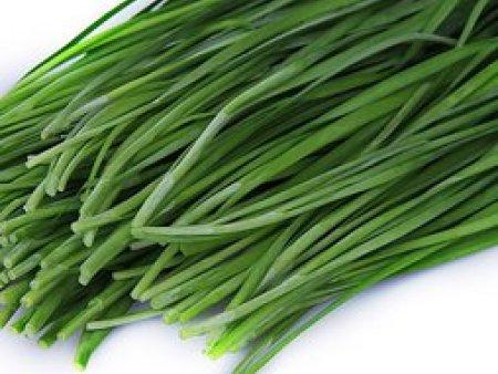 供应泰安超值的有机韭菜|济南韭菜