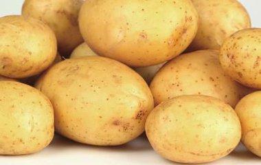 泰安地区哪里有卖土豆——土豆厂家供应