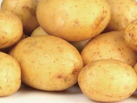 泰安銷量好的土豆批發供應-山東土豆批發