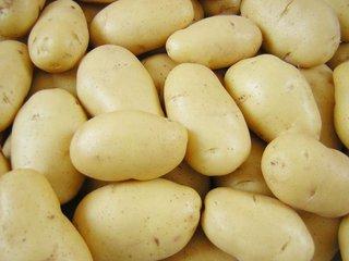 土豆厂家批发|采购实惠的土豆就找山东万泰蔬菜