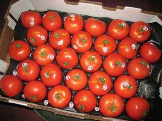 西红柿供货商|销量好的西红柿批发商