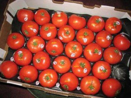 去哪找声誉好的西红柿供货商|济南西红柿基地
