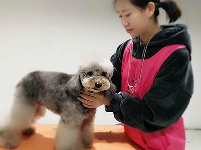 兰州宠物美容师学费多少|甘肃宠物美容师培训学校哪家好