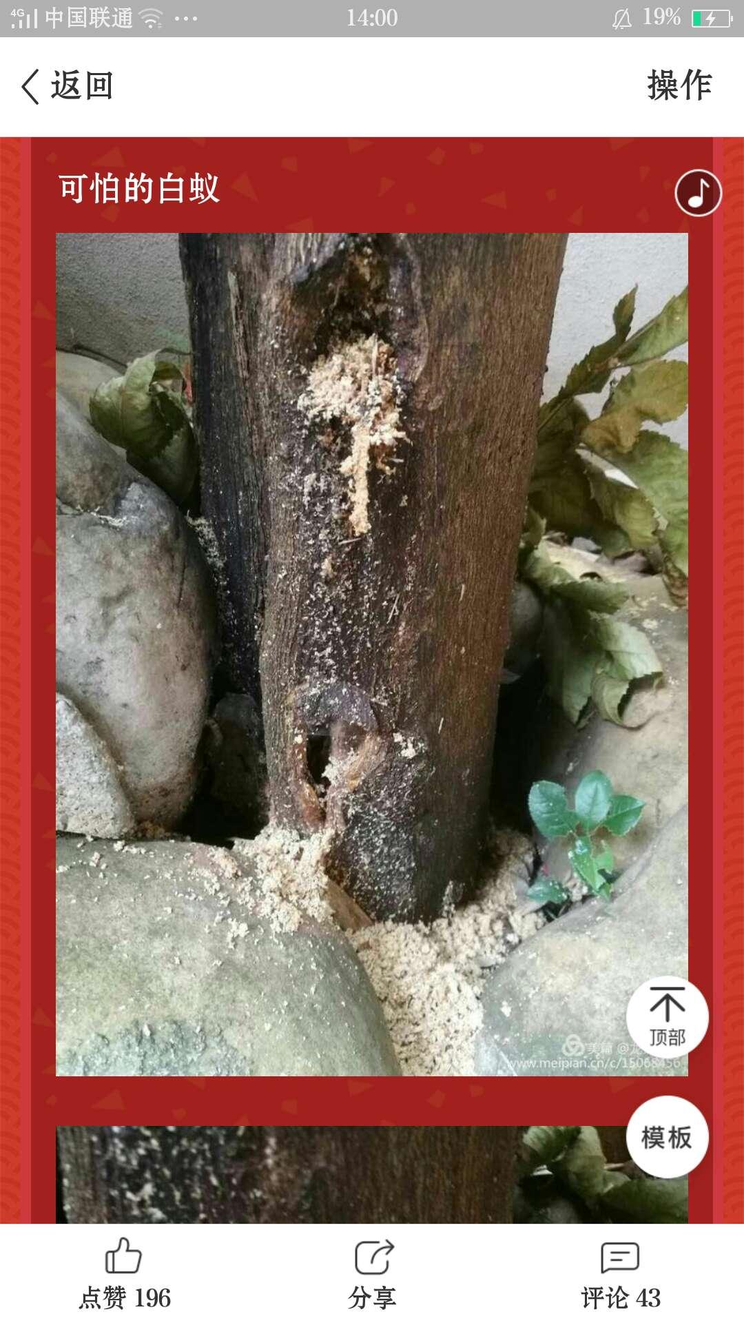 婁底殺蟑螂公司-可靠的白蟻防治哪里有