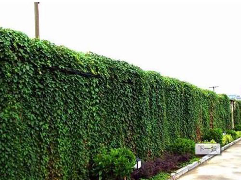 嘉峪關垂直綠化設計_去哪找口碑好的垂直綠化