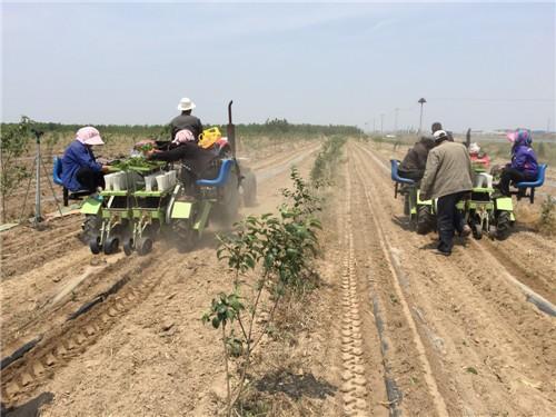 插秧機廠家|山東有品質的秧苗插秧機供應