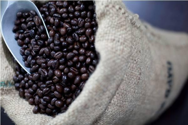 保山专业的猫屎咖啡供应商推荐|保山猫屎咖啡