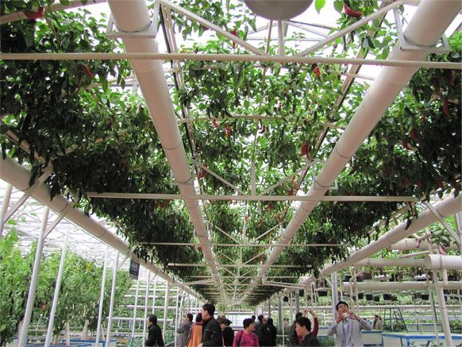 山东销量好的农业观光园|农业观光园施工