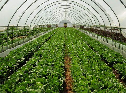 质量好的温室大棚推荐|广西蔬菜大棚定制