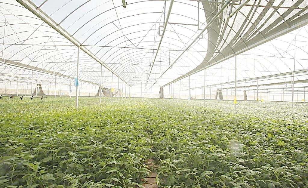 南寧蔬菜大棚價格-廣西農業大棚專業設計建造