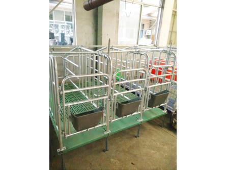 潍坊划算的限位栏供应-猪用限位栏供应商